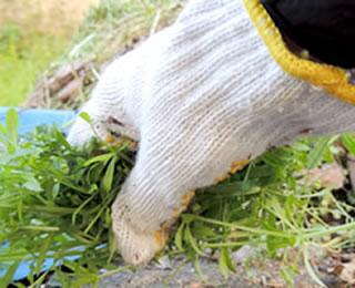 庭のお手入れ・草むしり